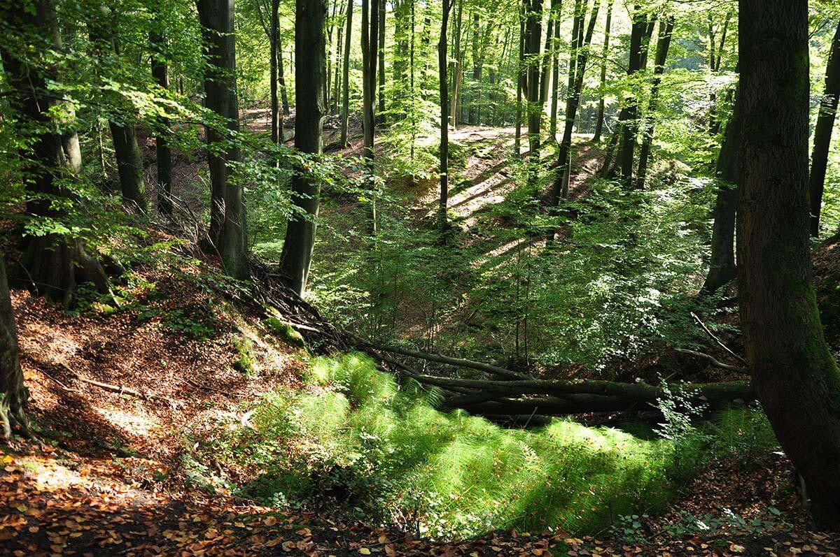 Bestattungsarten - Waldbestattung - Friedwald - Berens Bestattungen in Paderborn-Elsen